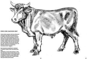 Härkä/lehmä, maaseudun ikonit
